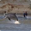 Каким образом дельфины помогают ловить рыбу бразильским рыбакам?