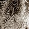 У каких насекомых на глазах растут волосы?