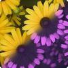 Какие люди могут воспринимать ультрафиолетовое излучение и в каком виде?