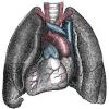 Сколько может продышать человек, родившийся от зеркальным отражением внутренних органов?