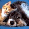 Когда на Руси можно одна кошка ценилась как стадо баранов?