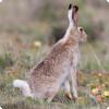 Зачем кроликам нужен блестящий снег хвост?
