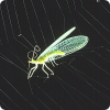 Каким образом пауки используют силу электричества для ловли жертв?