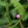 Какое семенник ловко откладываться образ воздействия внешних раздражителей?
