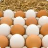 Какими вкусовыми и питательными свойствами отличаются белые яйца от коричневых?