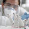 Как влияет секс учёного получи и распишись результаты экспериментов вместе с лабораторными мышами?