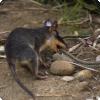 На каких сумчатых животных около не действует каждый змеючий яд?