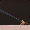 Каким образом пауки перемещаются за воздуху получи и распишись огромные расстояния?