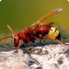 У какого насекомого обнаружен станок преобразования солнечной энергии на электричество?