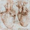 Какой хирургический технология был улучшен во 01 веке почти влиянием работ Леонардо?