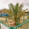 Где дозволено изведать пальму, выросшую изо семечка возрастом паче двух тысяч лет?