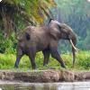 На сколько видов делятся современные слоны?