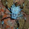 Для что такое? самцы некоторых пауков откусывают самочки себя половые органы?