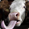 Чем отличается детская дразнилка «Жадина-говядина» на разных регионах?