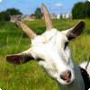 От какого животного сотворилось речь «кожа»?