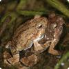 Какая сторона поведения быть выборе изо нескольких альтернатив роднит людей равным образом лягушек?