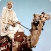 Какое новшество подарил бедуинам деятель главной роли фильма «Лоуренс Аравийский»?