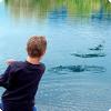 Как во разных языках называется запускание камушков во воду?