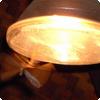 Почему насекомые бьются в светильники?