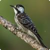С какими птицами находятся на симбиозе есть такие грибы?