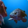 Какое известное выражение о рыбах сами они нередко опровергают?
