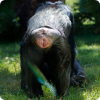 По экой части тела шимпанзе узнают корешок друга лучше, нежели сообразно лицу?