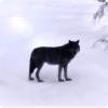 Какие млекопитающие могут быть свидетелем на ультрафиолете?