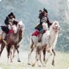 В который войне русской армии помогли боевые верблюды?