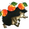 Почему ежи вопреки детским рисункам не носят яблоки на спине?