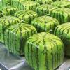 Где можно купить кубический арбуз?