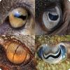 Какие животные имеют прямоугольные зрачки?