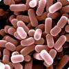 Какая память доступна бактериям?