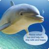 Каким языком пользуются дельфины?
